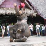 ダンシング・エレファント<br>Dancing Elephant